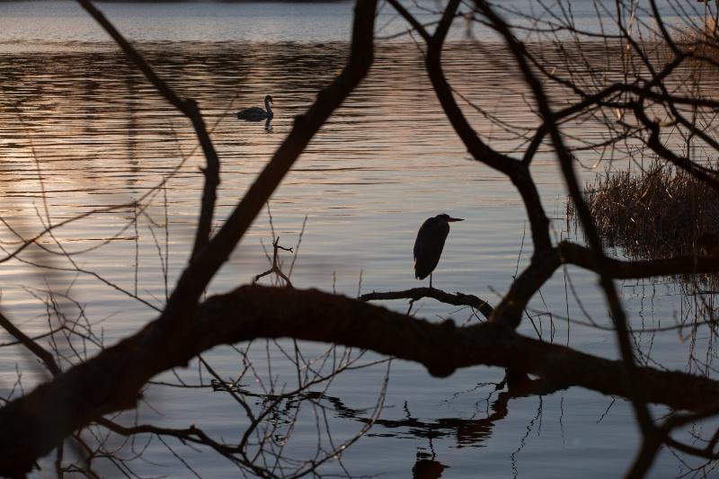 Birds in Balmy Winter