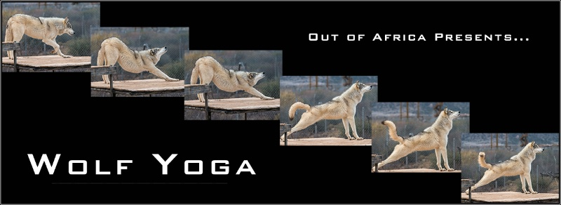 Composite of Wolf Stretching