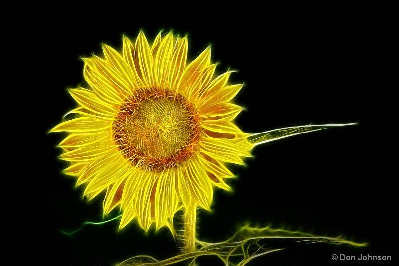 Artistic Sunflower in the Sun