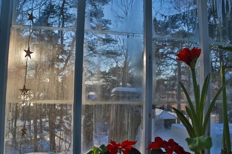 Wintry Glasshouse Garden