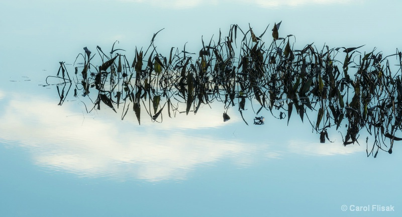 Scribbles in the Sky