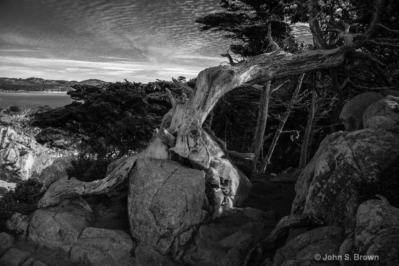 point lobos--2
