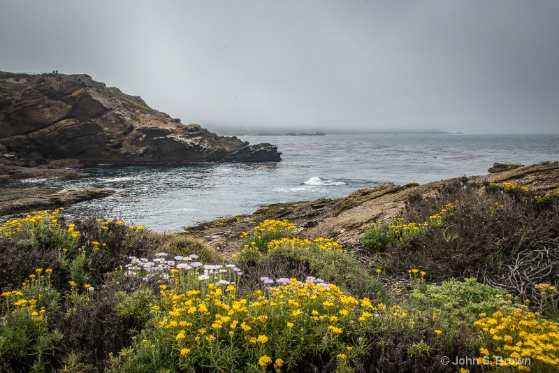 point lobos-9273