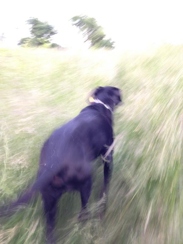 Buckeye-dog at the park