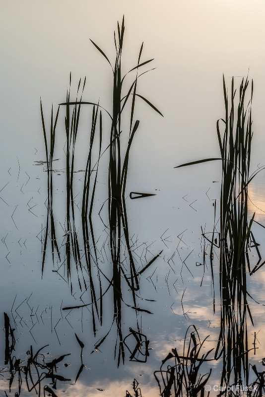 Silhouetted Grasses