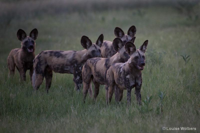 Wild Dog Hunt