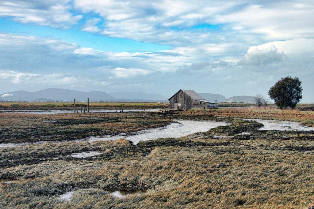 Skagit Valley Mud Flats