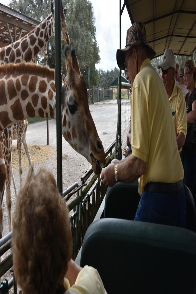 FEEDING THE GIRAFFES AT THE RANCH