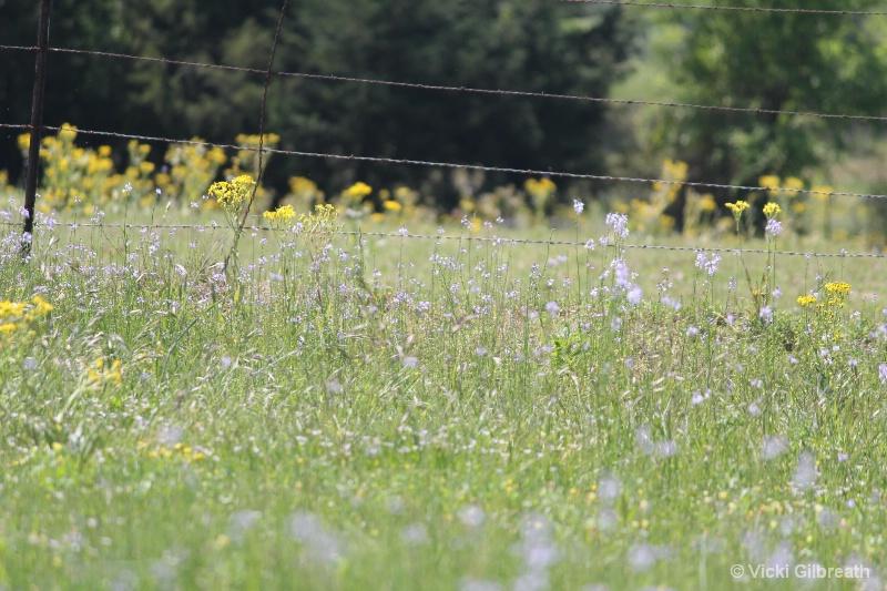 Pasture Pretty