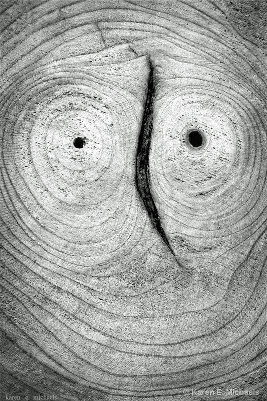 A Portrait in Tree Rings