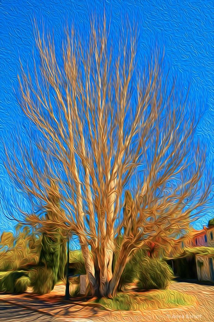 Weird tree in summer time