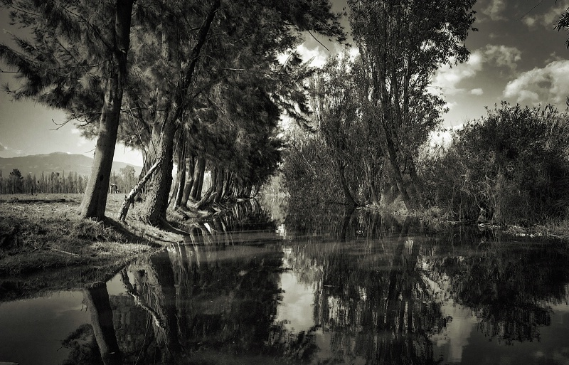 Xochimilco in the Morning Sepia