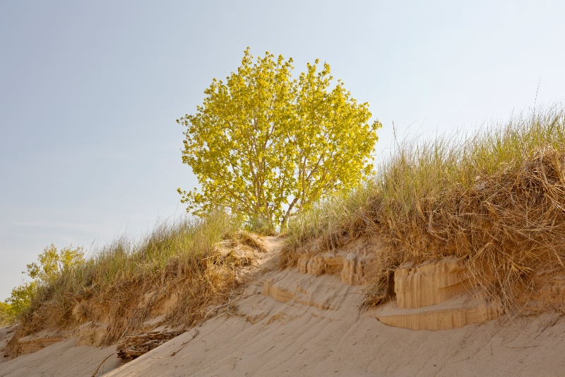 Dunes at Ottawa Beach Park #3