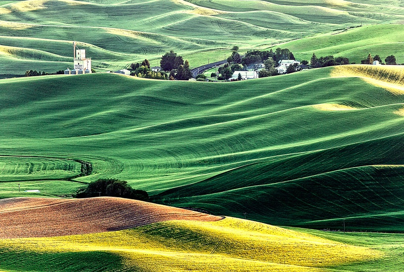 A Bucolic View, The Palouse, Washington