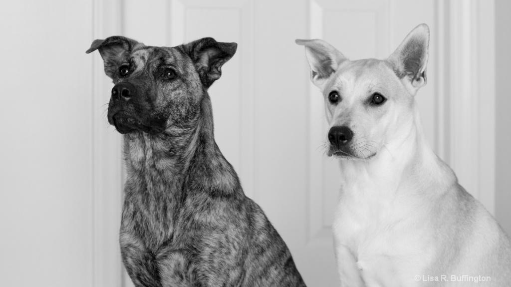 Roxy & Rocco
