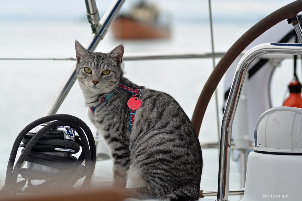 'Steelo' the sailing cat DSC 6728