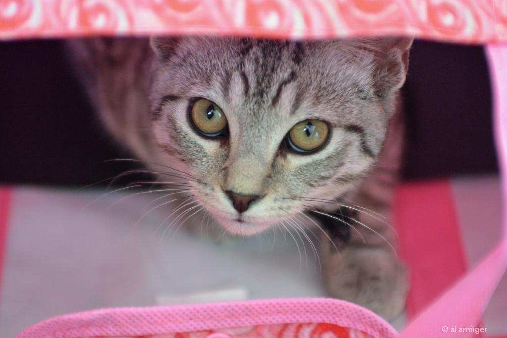 Cat in the bag DSC 3984