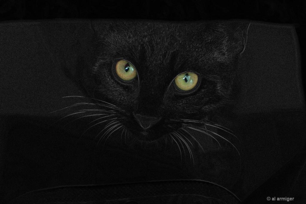 Eyes of Steelo DSC 3984 SE