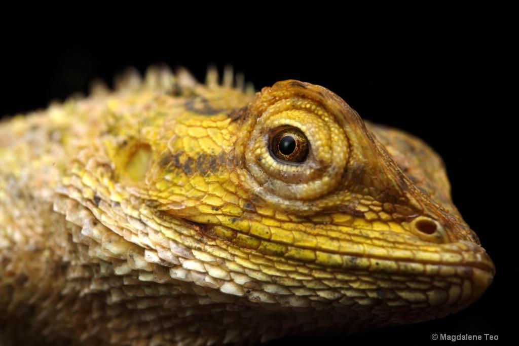 Macro - Iguana Close Up