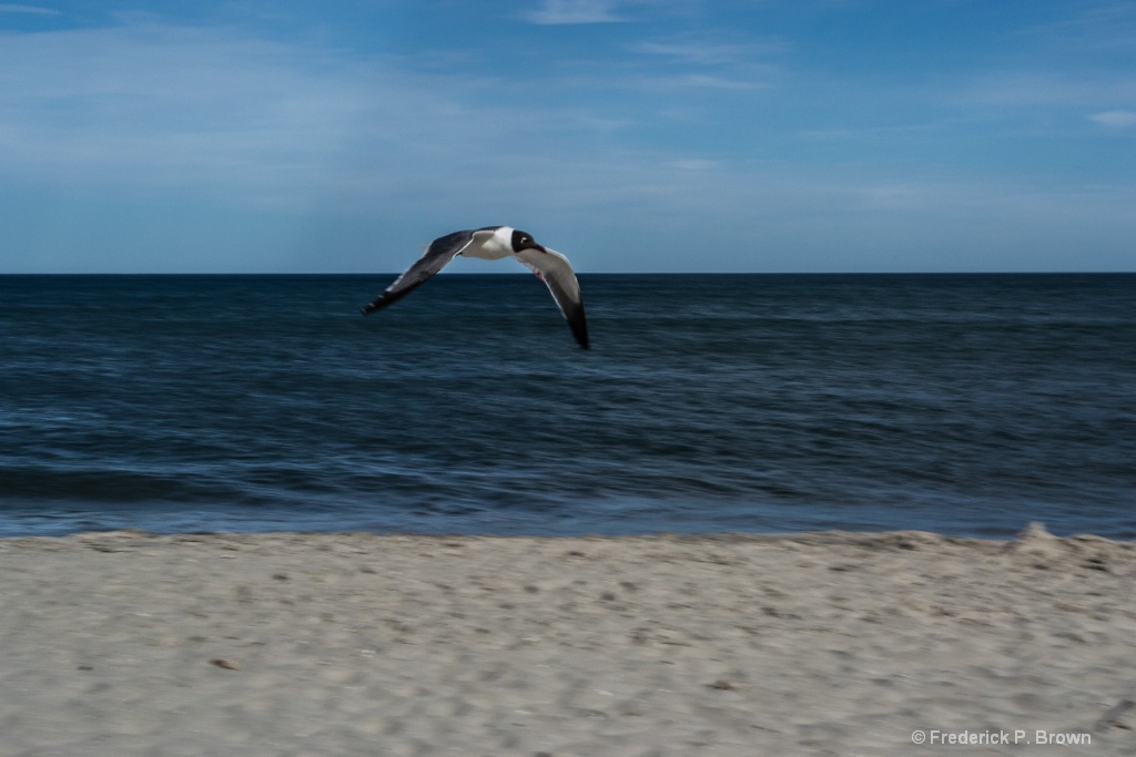 Seagull by the ocean-1