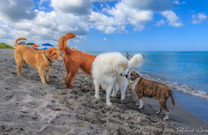 A Dogs Day at the Beach