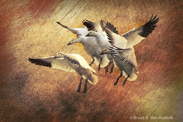 texture added to landing geese