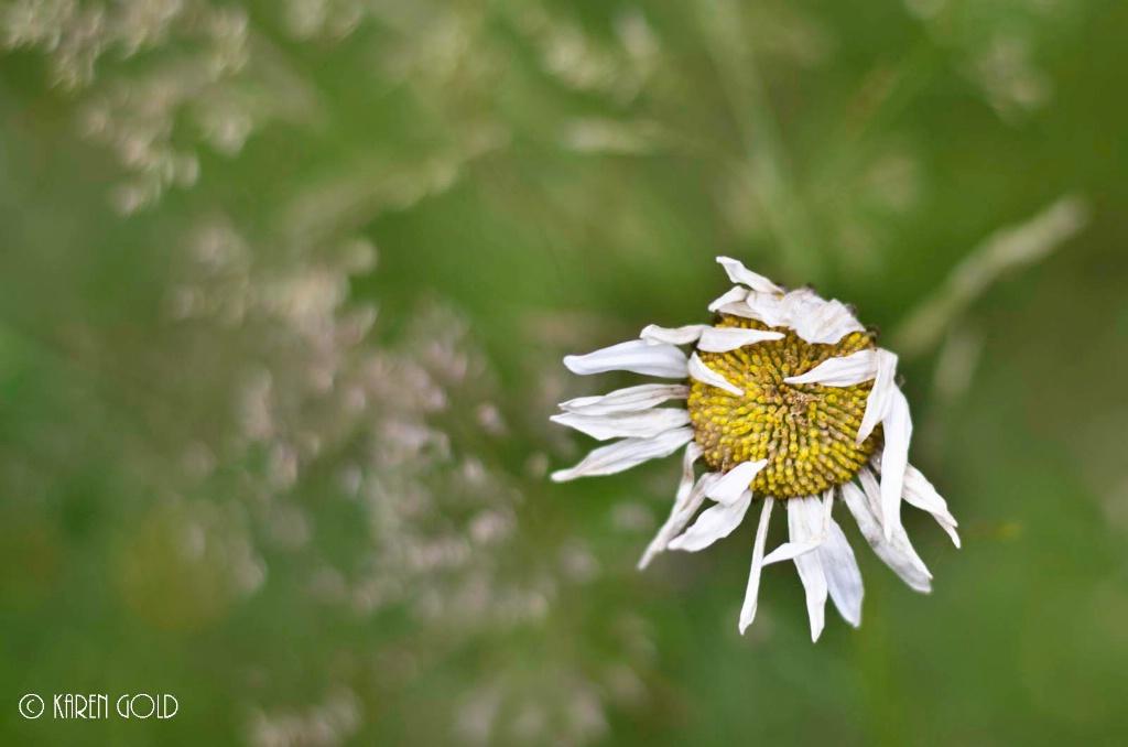 After Bloom