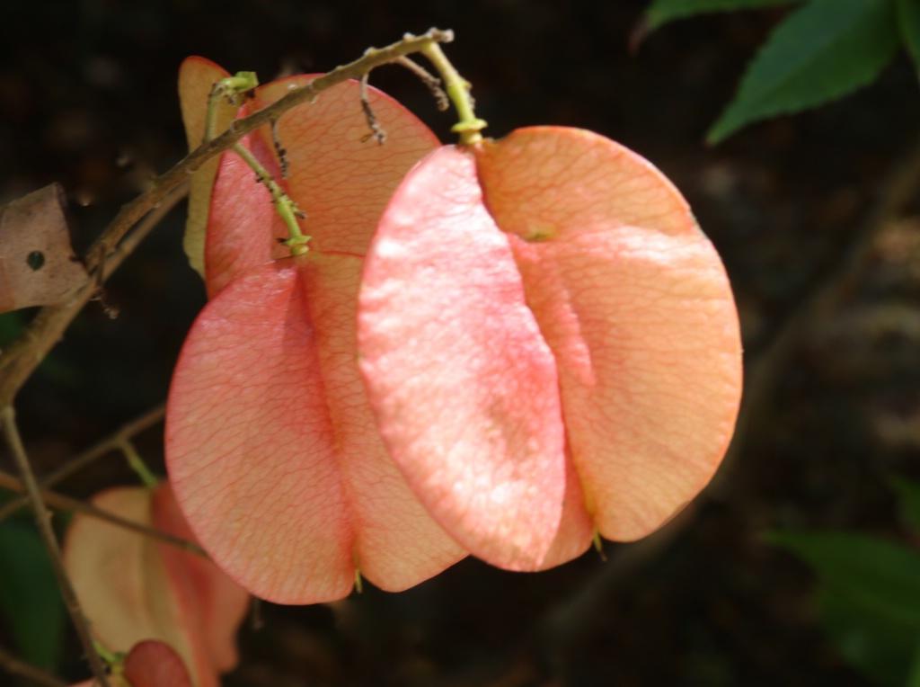 Raintree Bloom