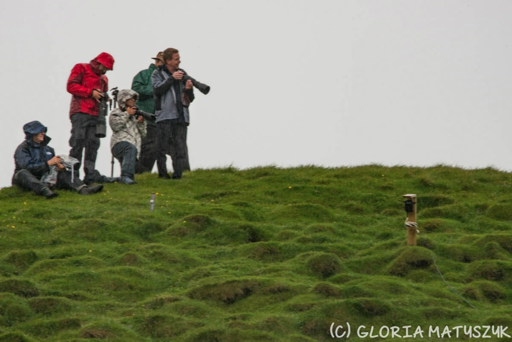More photographers in the rain hunting puffin