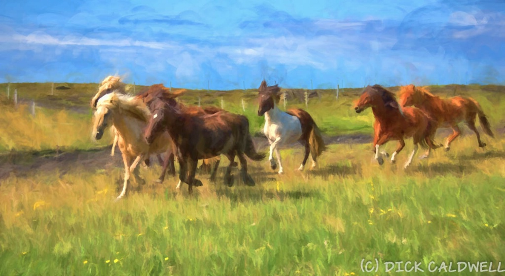 Icelandic horses with a impressionistic flair