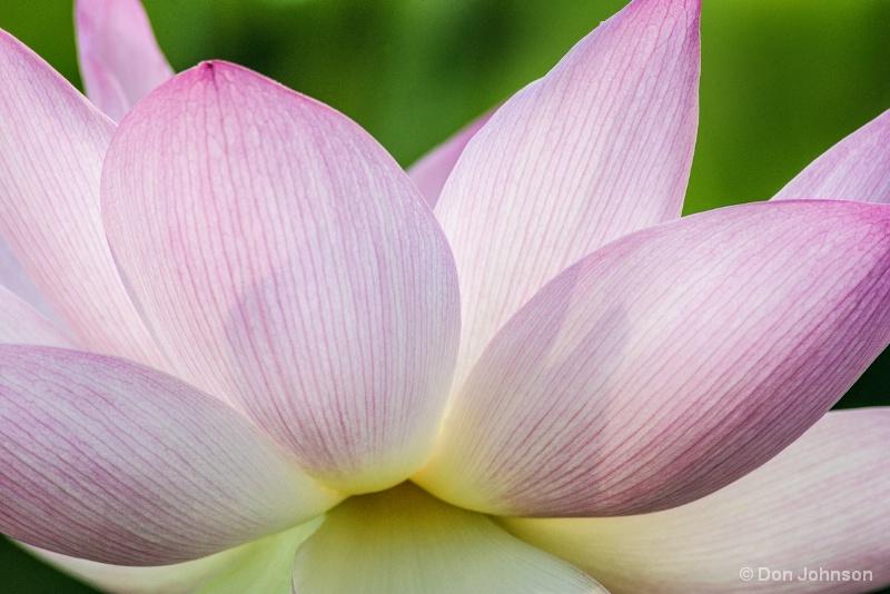 Lotus Macro 7-17-16 154