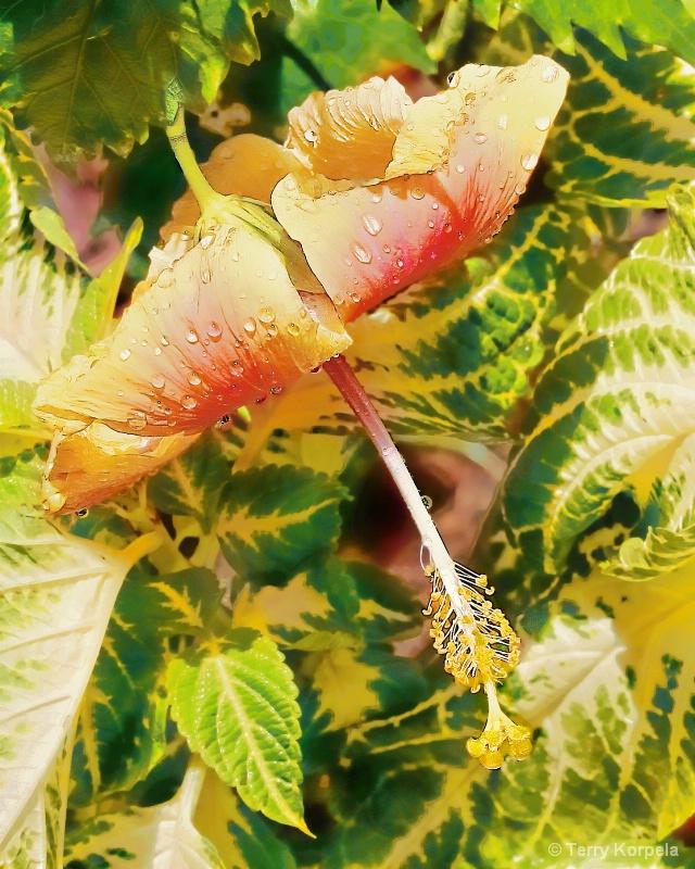 St. Lucia Botanical Garden