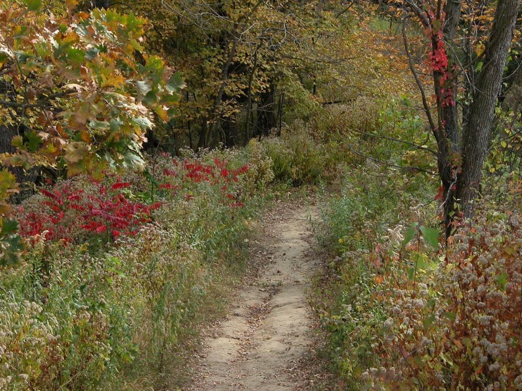 Autumn walk through Badger Ridge