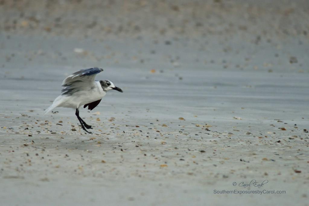 Gull's Landing