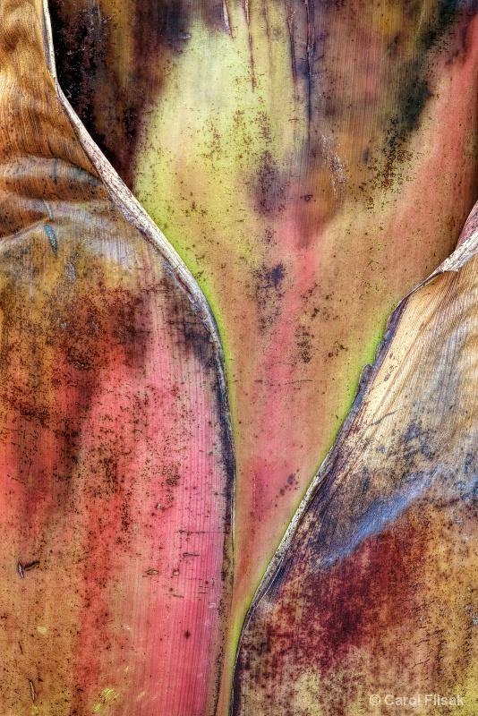 Banana Tree Details