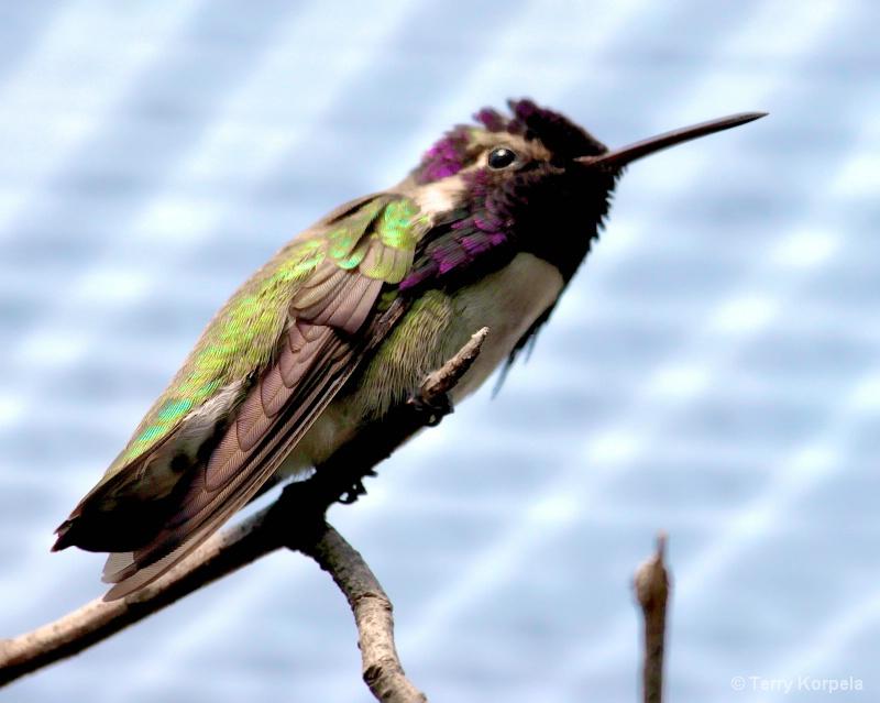Buzz Bird!!