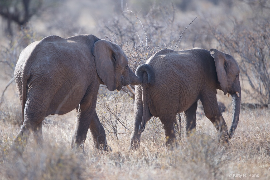 Elephants Moving Each other Along
