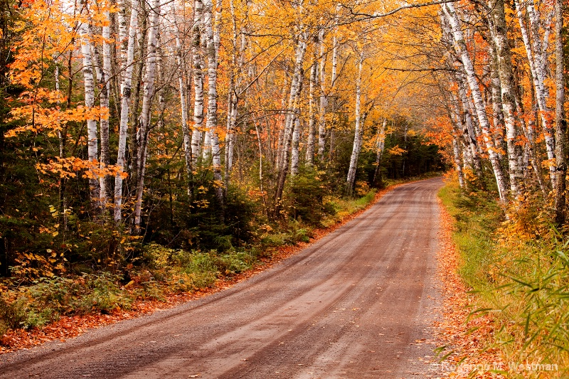 Superior National forest 2