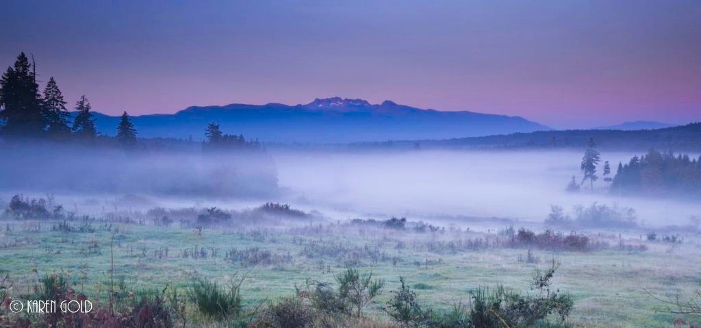 Foggy Pastures