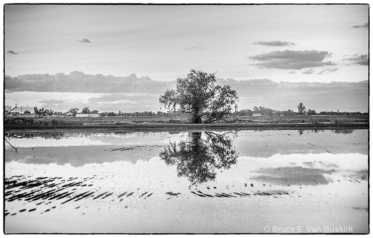 Rice field reflections