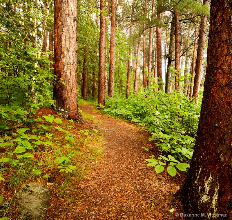 Beginnings of Bohall trail