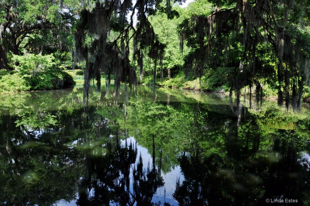 Swampy Splendor