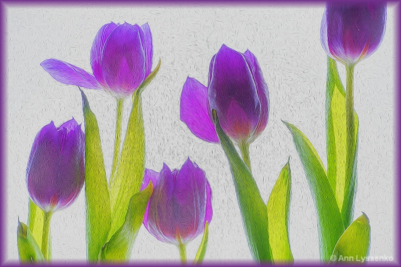 Five Purple Tulips