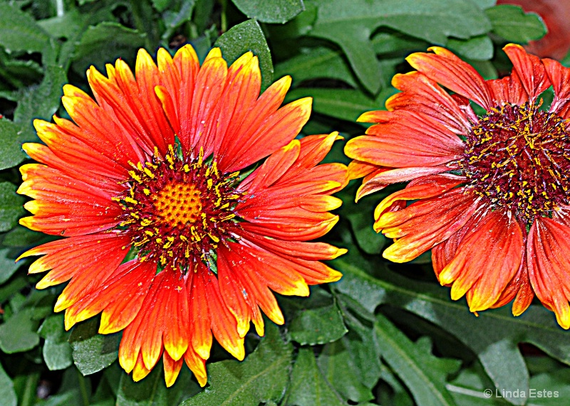 Snuggle Up Blanket Flowers