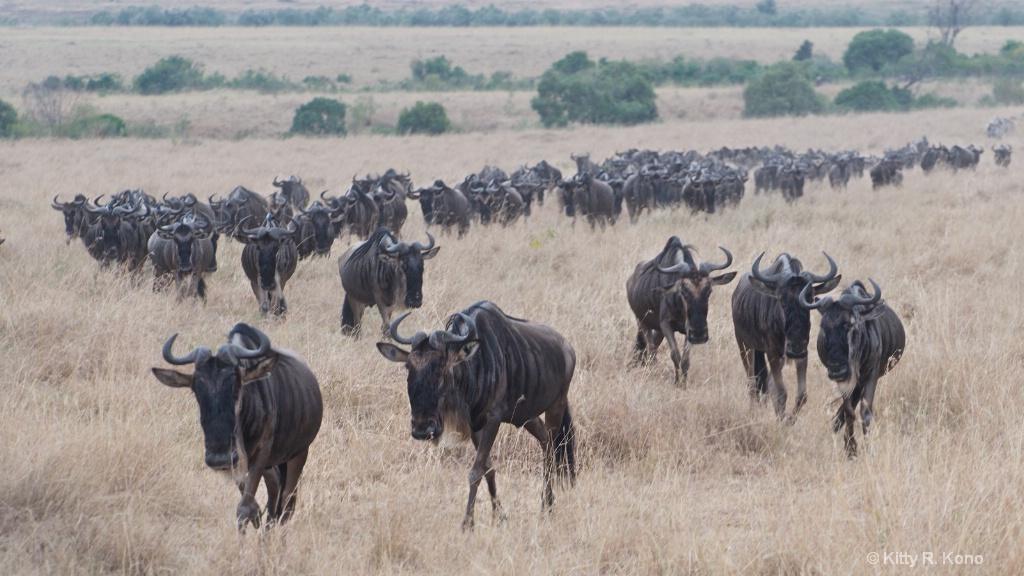The Wildebeests