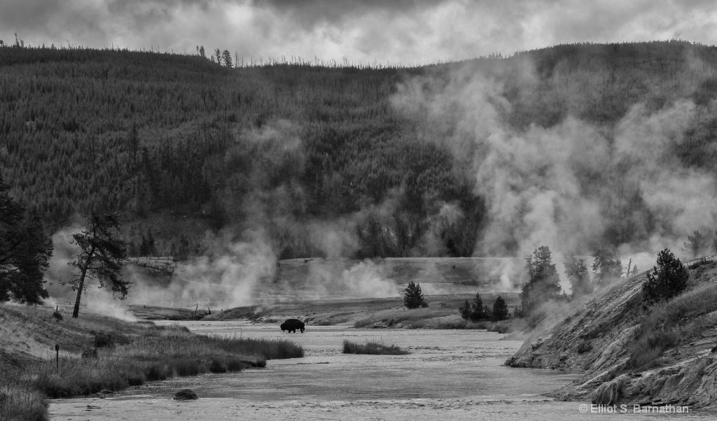 Yellowstone 98