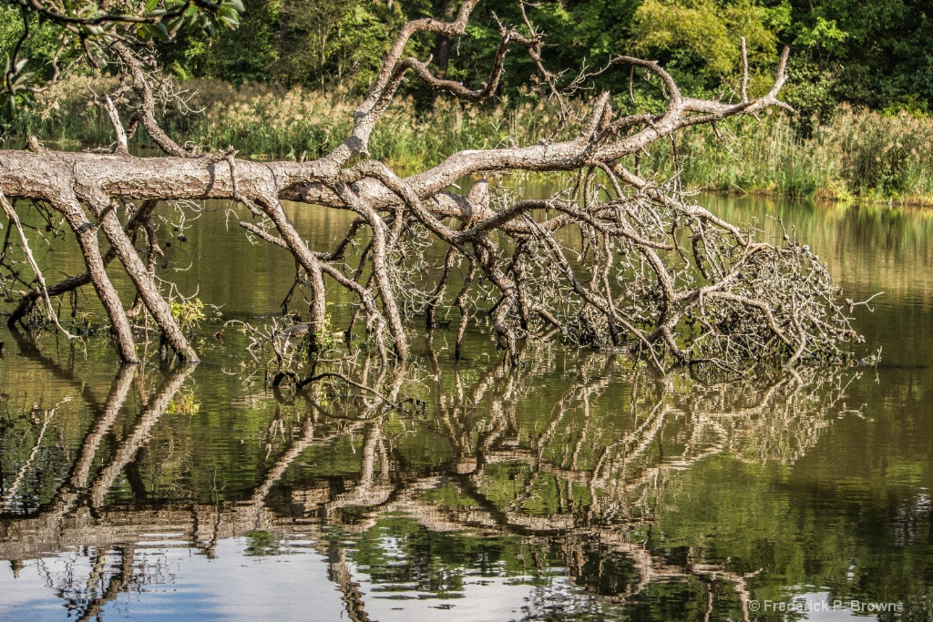 Fallen Tree And Reflection-1-1