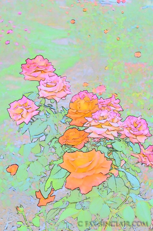 Rosescape 1