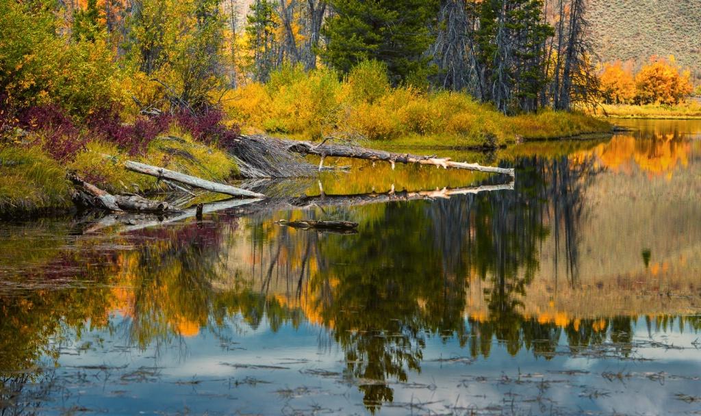 Beaver Pond, Oxbow Bend