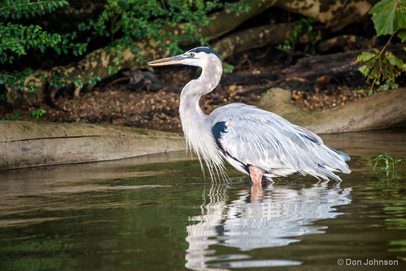 GB Heron Profile 10-22-16 282